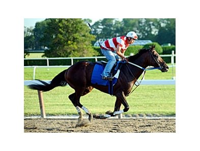 "Nehro worked a half-mile in :50 4/5 on June 6 at Belmont Park.<br><a target=""blank"" href=""http://www.bloodhorse.com/horse-racing/photo-store?ref=http%3A%2F%2Fpictopia.com%2Fperl%2Fgal%3Fprovider_id%3D368%26ptp_photo_id%3D9553218%26ref%3Dstory"">Order This Photo</a>"