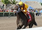 "Kauai Katie won the Old Hat Stakes at Gulfstream on January 1.<br><a target=""blank"" href=""http://photos.bloodhorse.com/AtTheRaces-1/at-the-races-2013/27257665_QgCqdh#!i=2299490637&k=TNwvPqD"">Order This Photo</a>"