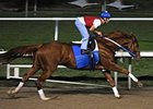 "Curlin posts his first timed workout Jan. 6 since he won the Breeders Cup Classic.<br><a target=""blank"" href=""http://www.bloodhorse.com/horse-racing/photo-store?ref=http%3A%2F%2Fpictopia.com%2Fperl%2Fgal%3Fprovider_id%3D368%26ptp_photo_id%3D3223949%26ref%3Dstory"">Order This Photo</a>"