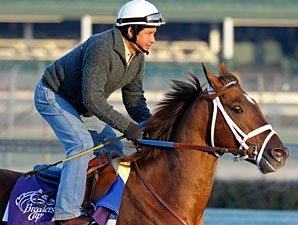 Smiling Tiger at Churchill Downs on October 30, 2010.