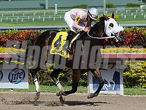 Star Harbour wins the 2013 Sunshine State Stakes.