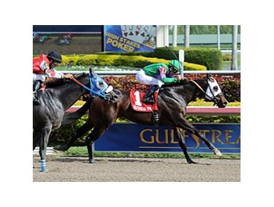 "Merit Man won the Spectacular Bid Stakes on New Year's Day.<br><a target=""blank"" href=""http://photos.bloodhorse.com/AtTheRaces-1/at-the-races-2013/27257665_QgCqdh#!i=2299502493&k=MVZN6Nh"">Order This Photo</a>"