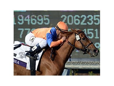 "Zagora won the 2012 Breeders' Cup Filly & Mare Turf at Santa Anita.<br><a target=""blank"" href=""http://photos.bloodhorse.com/BreedersCup/2012-Breeders-Cup/Filly-Mare-Turf/26130199_Qw6hnv#!i=2191959225&k=JNqGLs9"">Order This Photo</a>"
