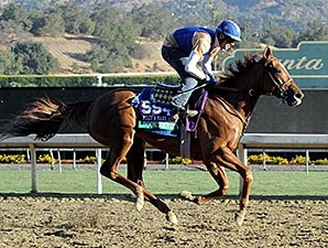 Book Review gallops at Santa Anita for the 2013 Breeders' Cup.