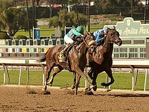 Blingo wins the 2014 San Antonio Stakes.