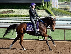 Danette preps for the 2014 Breeders' Cup.