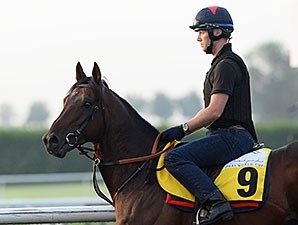Trade Storm, Dubai World Cup 2014