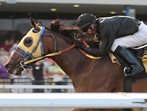 Whistle Pig wins the 2009 Leemat Stakes.