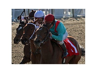 Chantilly Nayla (right) won the Mardi Gras Stakes on February 16.