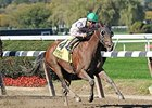 Salutos Amigos Best in 'Ruler, Eyes BC Sprint