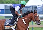 "Goldencents will try to win the Preakness after coming up short in the Derby.<br><a target=""blank"" href=""http://photos.bloodhorse.com/TripleCrown/2013-Triple-Crown/Preakness-Stakes-138/29423277_98XmS6#!i=2516160396&k=z5TCQqV"">Order This Photo</a>"