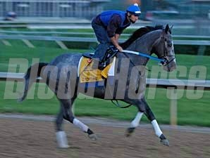 Z Fortune shown working at Churchill Downs.