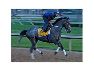 "Z Fortune shown working at Churchill Downs. <br><a target=""blank"" href=""http://www.bloodhorse.com/horse-racing/photo-store?ref=http%3A%2F%2Fpictopia.com%2Fperl%2Fgal%3Fprovider_id%3D368%26ptp_photo_id%3D4335632%0D%0A%26ref%3Dstory"">Order This Photo</a>"