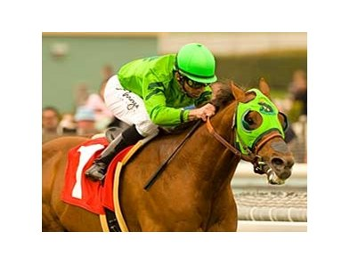 "Desert Code faces eight at a mile in the Arcadia.<br><a target=""blank"" href=""http://www.bloodhorse.com/horse-racing/photo-store?ref=http%3A%2F%2Fpictopia.com%2Fperl%2Fgal%3Fprovider_id%3D368%26ptp_photo_id%3D7756079%26ref%3Dstory"">Order This Photo</a>"