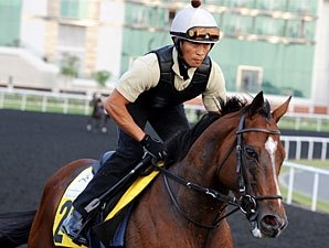 Top Group I Winner Presvis Dies from Colic