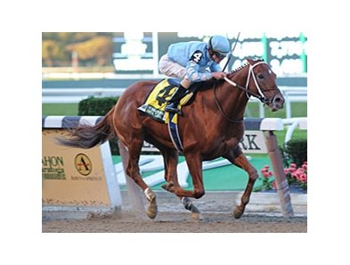 "Haynesfield won the Empire Classic Stakes on Oct 22.<br><a target=""blank"" href=""http://www.bloodhorse.com/horse-racing/photo-store?ref=http%3A%2F%2Fpictopia.com%2Fperl%2Fgal%3Fprovider_id%3D368%26ptp_photo_id%3D9715445%26ref%3Dstory"">Order This Photo</a>"