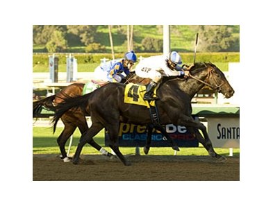 Indian Winter in the 2011 San Pedro Stakes.