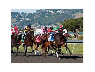 Zeewat leads the way in the California Derby at Golden Gate Fields.