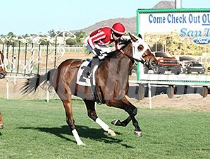 Mambo Man wins the Hasta La Vista Handicap.