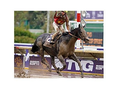 Defending Breeders' Cup Sprint champ Midnight Lute drew post 4 for this year's race.