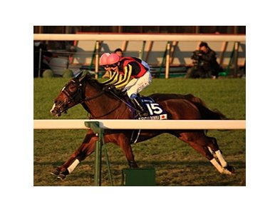 "Gentildonna won last year's Japan Cup by a nose over Orfevre.<br><a target=""blank"" href=""http://photos.bloodhorse.com/AtTheRaces-1/at-the-races-2012/22274956_jFd5jM#!i=2236046787&k=rzQJ7gL"">Order This Photo</a>"