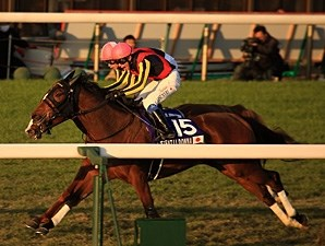Gentildonna wins the 2012 Japan Cup, just beating Orfervre.