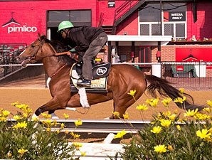 Goldencents - Pimlico, May 10. 2013.
