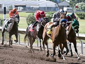 Let Faith Arise wins the 2013 California Wine Stakes.