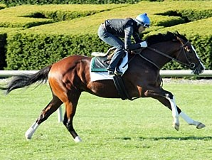 Get Stormy works at Keeneland on Oct. 28, 2010.