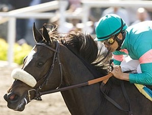 Zenyatta wins the 2009 Milady.