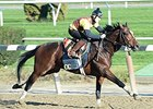 "Tonalist<br><a target=""blank"" href=""http://photos.bloodhorse.com/BreedersCup/2014-Breeders-Cup/Works/i-dF73XpT"">Order This Photo</a>"