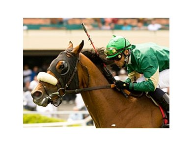 "Obrigado faces 8 in the San Luis Obispo Handicap, a race he won in 2007.<br><a target=""blank"" href=""http://www.bloodhorse.com/horse-racing/photo-store?ref=http%3A%2F%2Fpictopia.com%2Fperl%2Fgal%3Fprovider_id%3D368%26ptp_photo_id%3D8233988%26ref%3Dstory"">Order This Photo</a>"