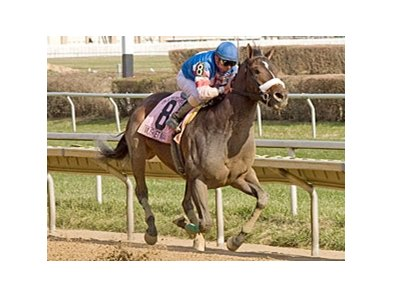 Musket Man strides away in the Illinois Derby.
