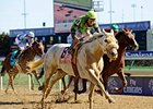 "Breeders' Cup Marathon winner Afleet Again faces 5 in the Valedictory Stakes.<br><a target=""blank"" href=""http://www.bloodhorse.com/horse-racing/photo-store?ref=http%3A%2F%2Fpictopia.com%2Fperl%2Fgal%3Fprovider_id%3D368%26ptp_photo_id%3D9729403%26ref%3Dstory"">Order This Photo</a>"