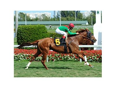 "Animal Kingdom comes home strong to return a winner at Gulfstream.<br><a target=""blank"" href=""http://www.bloodhorse.com/horse-racing/photo-store?ref=http%3A%2F%2Fpictopia.com%2Fperl%2Fgal%3Fprovider_id%3D368%26ptp_photo_id%3D9814991%26ref%3Dstory"">Order This Photo</a>"