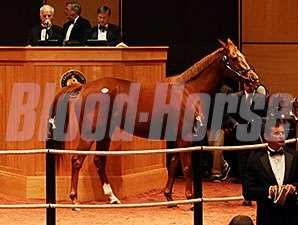 Wine Princess at the Fasig-Tipton November Sale.