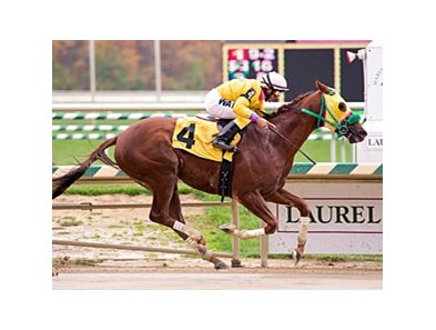 Rapid Redux will seek his 22nd consecutive victory Jan. 4 at Laurel Park.