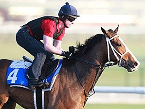 Elleval preps for the Dubai World Cup race card March 24.