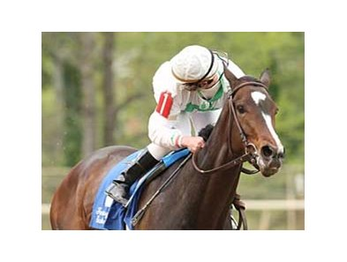Jockey Calvin Borel looks back for the competition as Rachel Alexandra scores easily in the Fantasy Stakes.