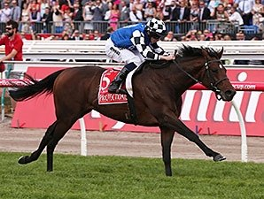 Protectionist Flies To Melbourne Cup Win Bloodhorse