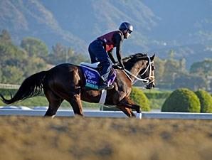 Poseidon S Warrior Horse Profile Bloodhorse