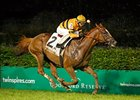 "Wise Dan<br><a target=""blank"" href=""http://photos.bloodhorse.com/AtTheRaces-1/at-the-races-2013/27257665_QgCqdh#!i=2605311394&k=55jRnpZ"">Order This Photo</a>"