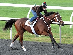 Havre de Grace works at Keeneland, October 24, 2011.