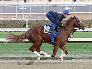 Tell a Kelly works towards the Breeders' Cup Oct. 24, 2010.