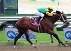 "Palace Malice<br><a target=""blank"" href=""http://photos.bloodhorse.com/AtTheRaces-1/at-the-races-2012/22274956_jFd5jM#!i=2009920554&k=HLH8Tn7"">Order This Photo</a>"