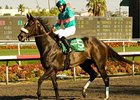 "Zenyatta<br><a target=""blank"" href=""http://www.bloodhorse.com/horse-racing/photo-store?ref=http%3A%2F%2Fpictopia.com%2Fperl%2Fgal%3Fprovider_id%3D368%26ptp_photo_id%3D9217805%26ref%3Dstory"">Order This Photo</a>"