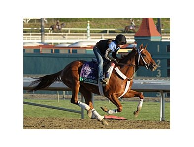 "Hazardous at Santa Anita on October 30.<br><a target=""blank"" href=""http://photos.bloodhorse.com/BreedersCup/2012-Breeders-Cup/Works/26130247_gxH6nS#!i=2185216436&k=mzXtjtL"">Order This Photo</a>"