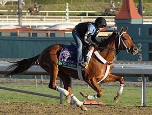 Hazardous - Breeders' Cup 2012
