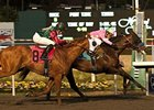 Liaison winning the 2011 Cash Call Futurity.
