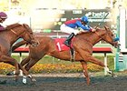 Blueskiesnrainbows won the 2013 Native Diver Handicap at Hollywood Park.